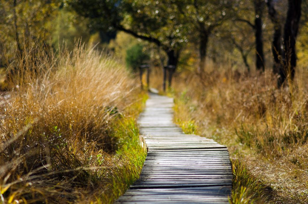 adventure-boardwalk-daylight-289327